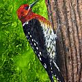 Red Breasted Sapsucker by Dee Carpenter