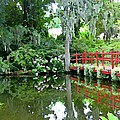 Red Bridge Over The Magnolia Swamp Land by Mindy Newman