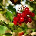 Red Bunch by LeeAnn McLaneGoetz McLaneGoetzStudioLLCcom