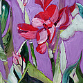 Red Canna Lily by Suzanne Willis