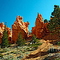 Red Canyon Trail by Robert Bales