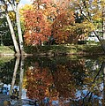 Red Cedar Reflections by Joseph Yarbrough