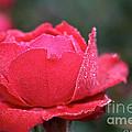 Red Crystal Petals by Susan Herber