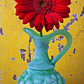 Red Daisy In Grape Vase by Garry Gay