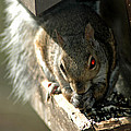 Red Eyed Demon Squirrel by LeeAnn McLaneGoetz McLaneGoetzStudioLLCcom