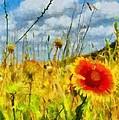 Red Flower In The Field by Jeffrey Kolker
