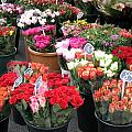 Red Flowers In French Flower Market by Carla Parris