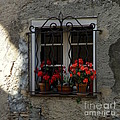 Red Geraniums In Window by Lainie Wrightson