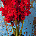 Red Glads Against Blue Wall by Garry Gay