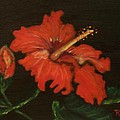 Red Hibiscus by Roberta Ress