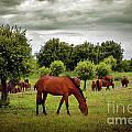 Red Horses by Carlos Caetano