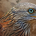 Red Kite - Featured In The Groups - Spectacular Artworks And Wildlife by Ericamaxine Price