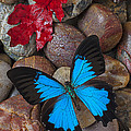 Red Leaf And Blue Butterfly by Garry Gay