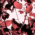 Red Leaves by Amara Roberts