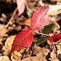 Red Leaves by Henrik Lehnerer