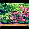 Red Leaves Pano by Richard  Montemurro