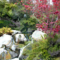 Red Maple Above The Falls by Elaine Plesser