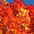 Red Orange Yellow Autumn Leaves Art Prints Vivid Bright by Baslee Troutman