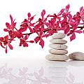 Red Orchid With Balance Stone by Atiketta Sangasaeng