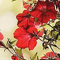 Red Petunias by Mel Hensley