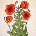 Red Poppies Watercolor Painting by Georgeta  Blanaru