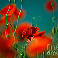 Red Poppy Flowers 05 by Nailia Schwarz