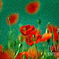 Red Poppy Flowers 07 by Nailia Schwarz