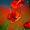 Red Poppy Flowers 08 by Nailia Schwarz