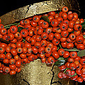Red Pyracantha Berries by Phyllis Denton