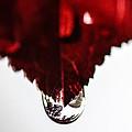 Red Rain by Mitch Shindelbower