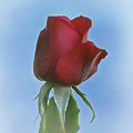 Red Rose by Ernie Echols