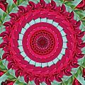 Red Rose Mandala by Bill Barber