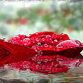 Red Rose Reflections by Debbie Portwood