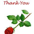Red Rose Thank You Card by Irina Sztukowski