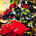 Red Roses by Leslie Hunziker