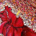 Red by Sandra Navarro