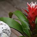 Red Spikes by Bonnie Myszka