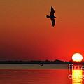 Red Summer Sunset by Pamela Baker