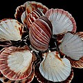 Red-toned Seashells by Maria Urso