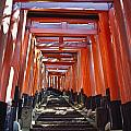 Red Torii Arches Over Steps At Inari by Axiom Photographic