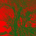 Red Tree by Vasil Georgiev