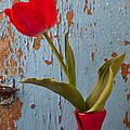 Red Tulip Bending by Garry Gay