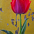Red Tulip With Yellow Wall by Garry Gay