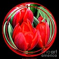 Red Tulips Under Glass by Rose Santuci-Sofranko