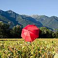 Red Umbrella On The Field by Mats Silvan