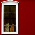 Red by Vicki Pelham