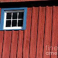 Red White And Blue Window by Sabrina L Ryan