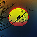 Red Winged Blackbird In The Sun by Bill Cannon