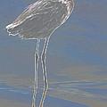 Reddish Egret by Deborah Benoit