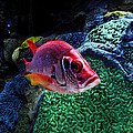 Redfish by David Lee Thompson